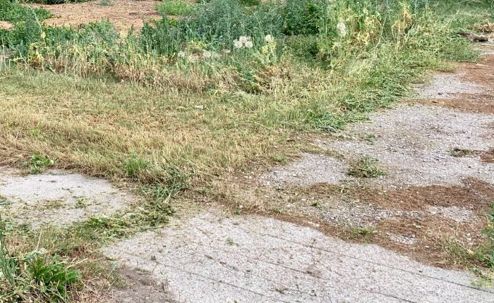 overgrown vacant property for sale
